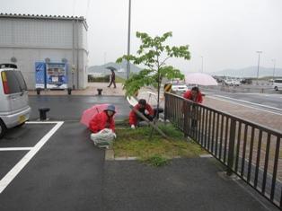 宇野港の桜公園桜の並木道の清掃(おかやまアダプト事業)