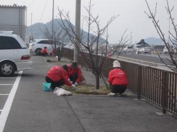 宇野港桜公園桜の並木道の施肥を実施