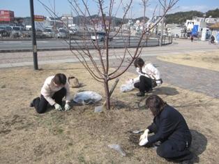 宇野港の桜公園桜の並木道の施肥