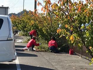 宇野港の桜公園桜の並木道の清掃